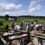 A sunny Rathmell YFC 69th Annual Show